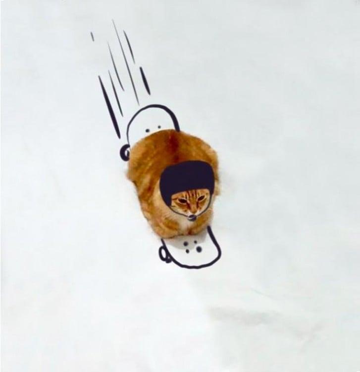 Gato con un dibujo que simula estar patinando