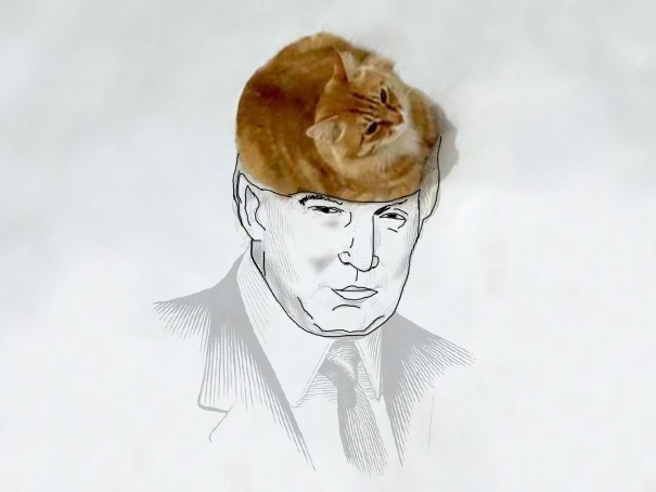 Gato que simula ser el cabello de un dibujo de Donald Trump