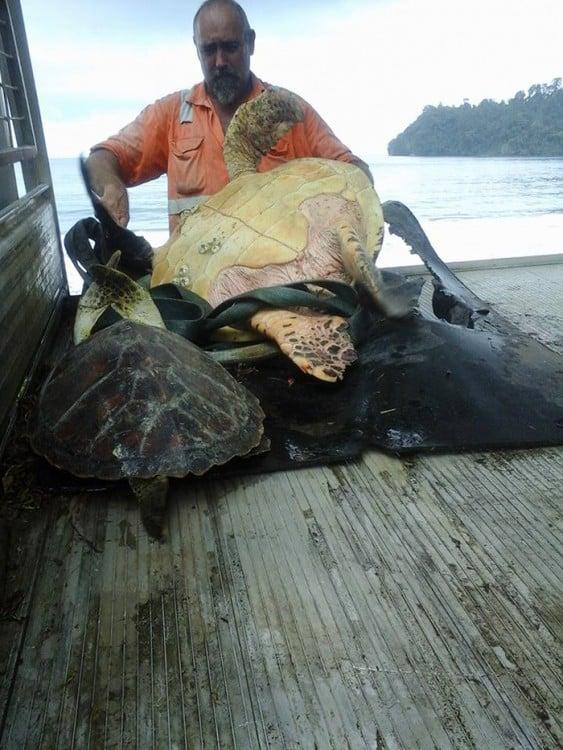 Compraron dos tortugas marinas... Mira lo que hicieron!!