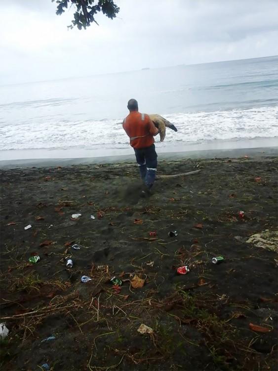 Compra en el Mercado Negro dos tortugas marinas para devolverlas al mar