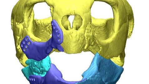 escaner de la cabeza de la tortuga