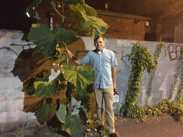 hombre tomando una planta pata de elefante como marihuana