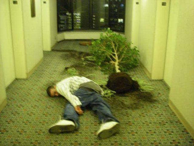 hombre borracho saca las plantas de su edificio
