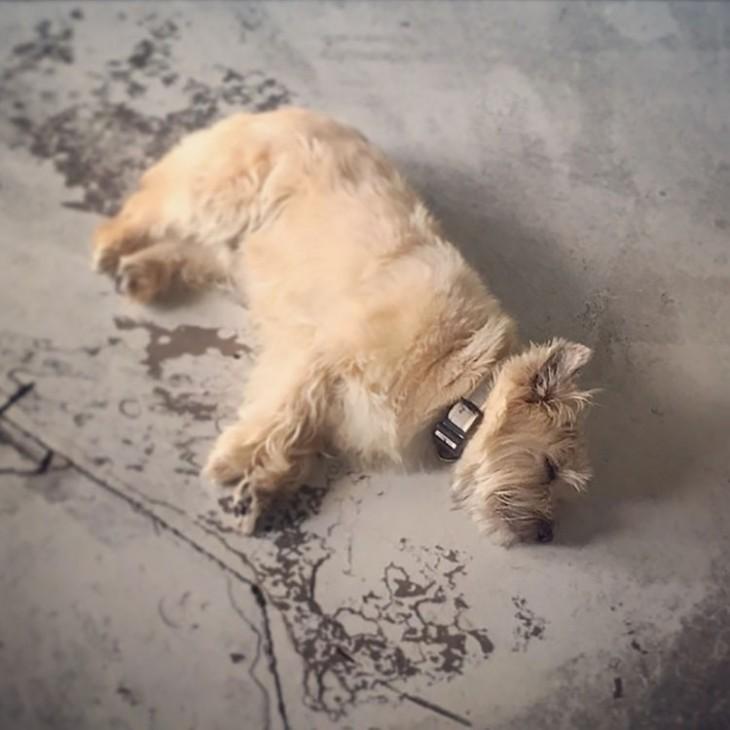 perro mjuy cansado dormido en el piso parece que lo mataron