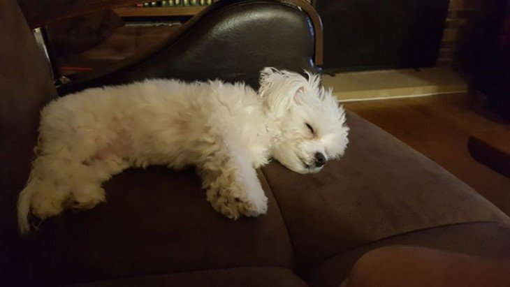 perrita dormida en la silla de su dueña