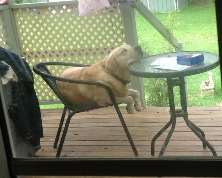 labrador dormido sobre la mesa de escanso del jardín