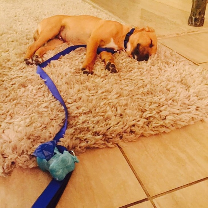 perrito dormido en la alfombra después de un largo paseo de caminata consu duerño