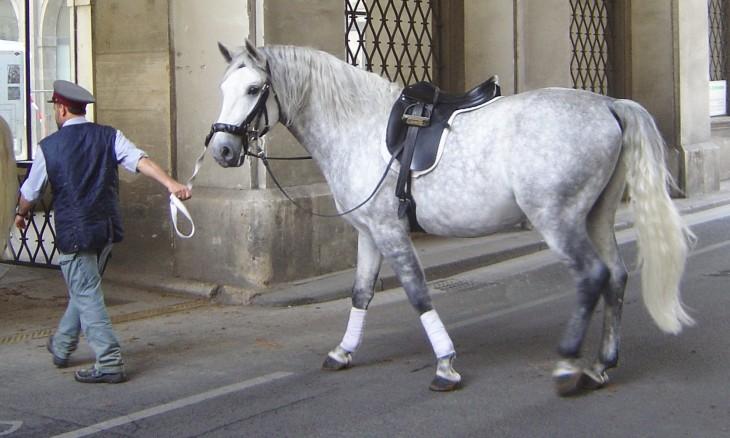 caballo de pura sangre