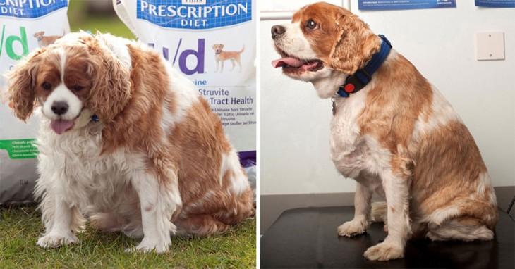 perrito que pesaba el doble de su peso ideal