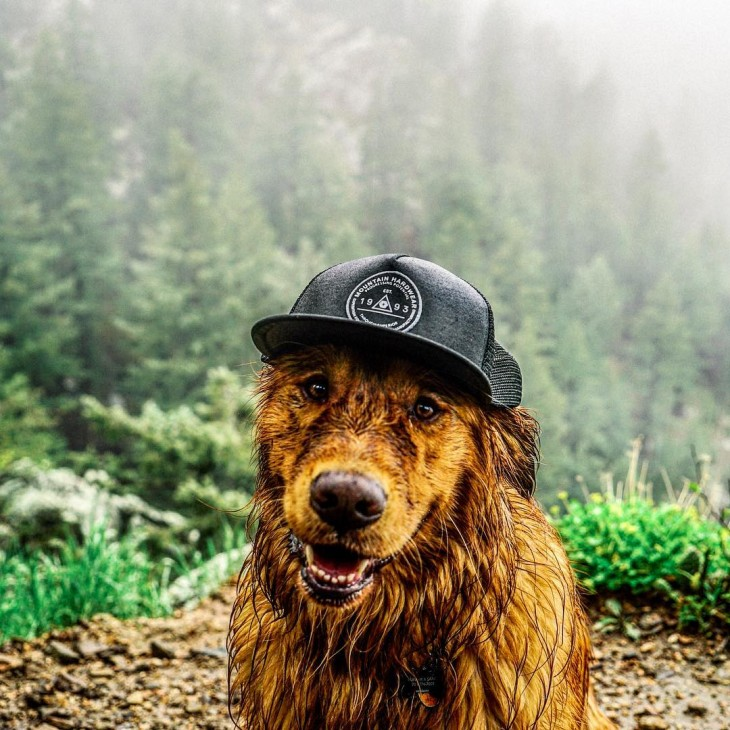 Él es Aspen, el perro viajero: Conoce sus increíbles aventuras alrededor del mundo