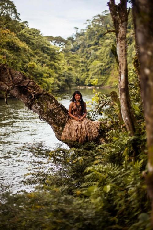mujer del mazonas en una rama de un gran arbol