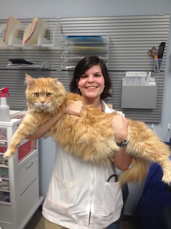 gatote cargado por su dueña