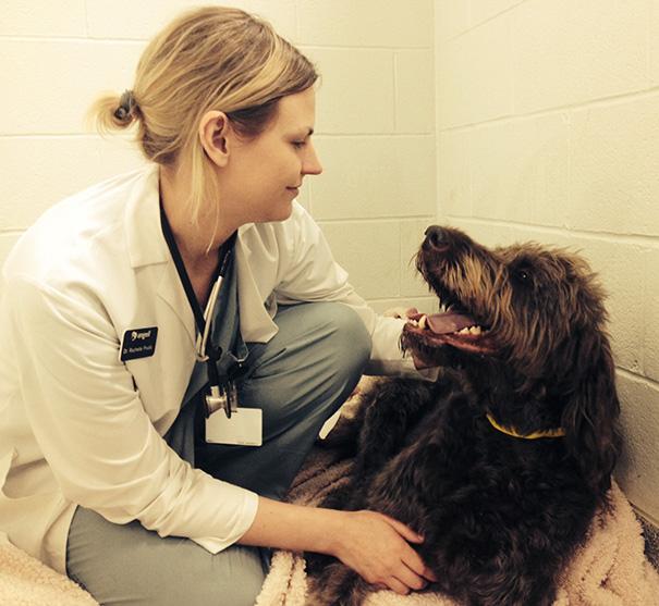 mujer acariciando a un perro agradecido por haberlo salvado