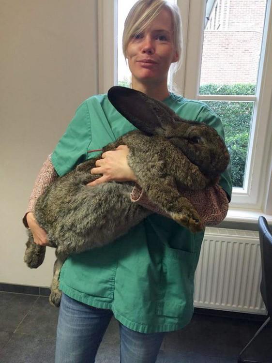 mujer con conejote