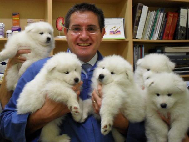 hombre junto a 5 cachorros esponjosos