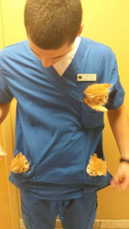 gatitos en las bolsas de su veterinario no se quieren separara de él