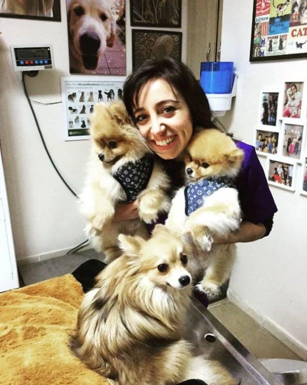 mujer con sus perritos pomerianos en la sala de espera del hospital veterinario