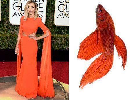 Giuliana rancic paraecia un pez beta muerto