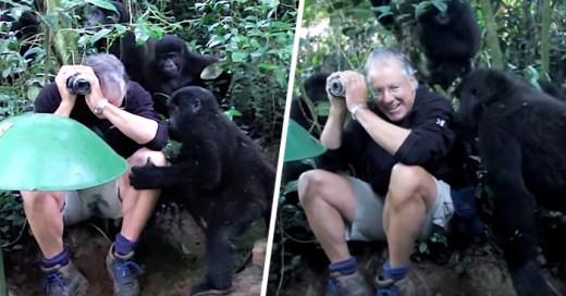 Fotografo tiene un inesperado encuentro con una familia de gorilas espalda plateada