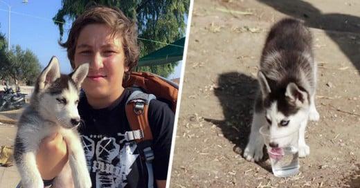 Refugiado Sirio De 17 Años Llevó A Su Cachorro Durante 500 Kms Hasta Grecia
