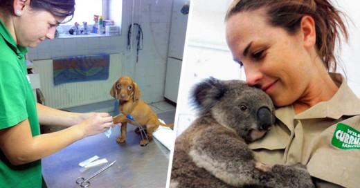 ventajas de trabajar en un hospital veterinario