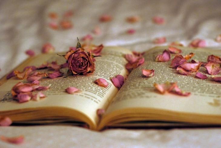 libro abierto con pétalos de rosas secos