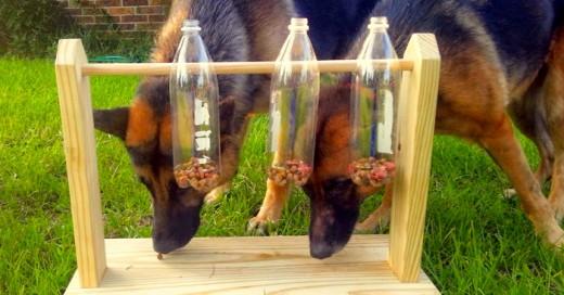 Entrena la mente de tu perro construyendo tu mismo este sencillo juguete para mascotas