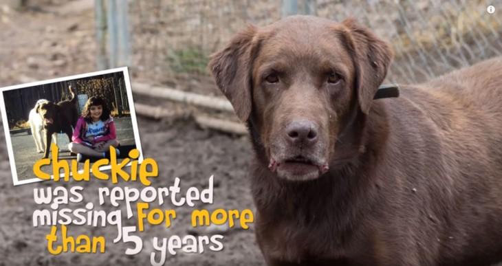 Chuckie un perro que se reporto perdido hace 5 años