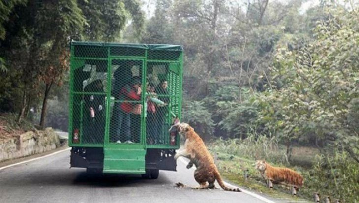 El zoológico Lehe Ledu en China donde los humanos son enjaulados y los animales libres