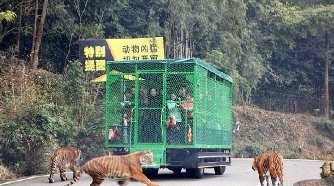 animales caminando libremente por el zoológico Lehe Ledu en China