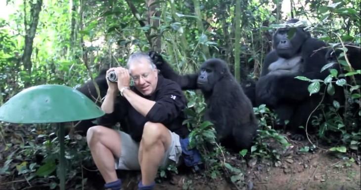 Gorilas espalda plateada acariciando la cabeza del fotógrafo John