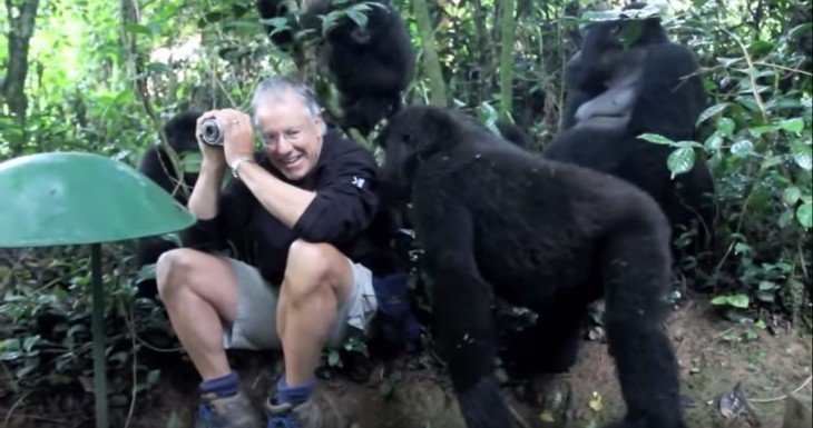 John fotógrafo que fue rodeado por gorilas espalda plateada
