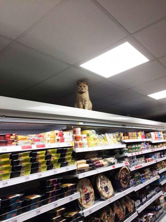 Famoso gato dentro de un supermercado en Londres