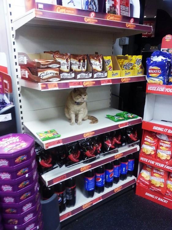 Gato entre los estantes de un supermercado en Londres