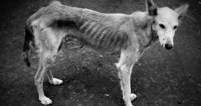 fotografía a blanco y negro de un perro callejero desnutrido y muy descuidado