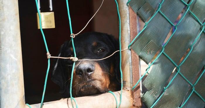 perro detrás de una reja con cara triste