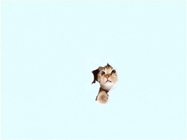pequeño gatito asomándose por una superficie en color azul cielo