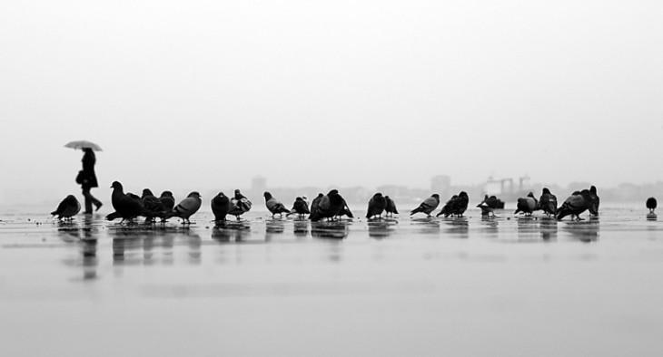 fotografía de un grupo de palomas en el suelo
