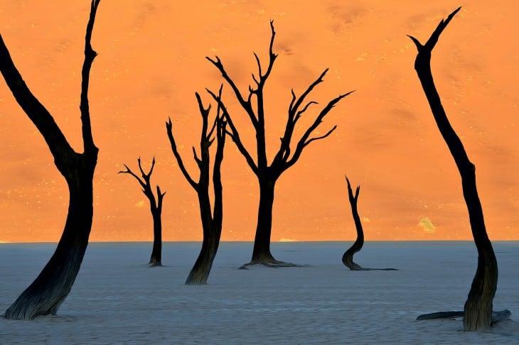 Fotografía de unos árboles bajo un cielo naranja