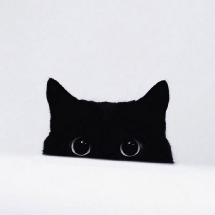 imagen de la media cara de un gato negro sobre un fondo blanco