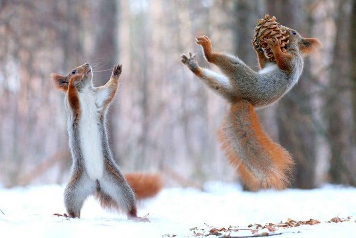 imagen de dos ardillas lanzando y agarrando comida en el bosque nevado
