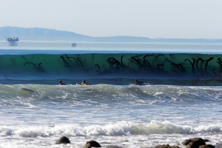 personas nadando muy cerca de unas enormes algas