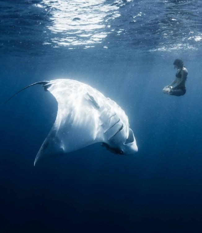 chica meditando debajo del mar cerca de una mantaraya gigante