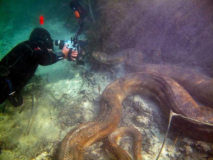 buzo debajo del mar tomando fotos a una enorme serpiente