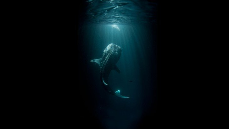 Fotografía debajo del mar de una ballena que está a punto de salir del mar
