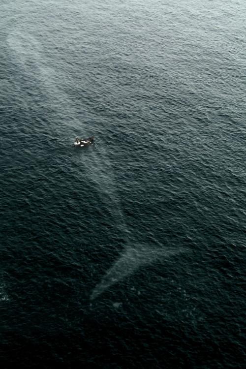 lancha en el mar sobre una enorme ballena