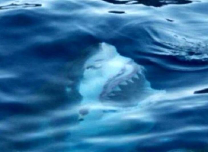 cara de un tiburón a punto de salir del mar