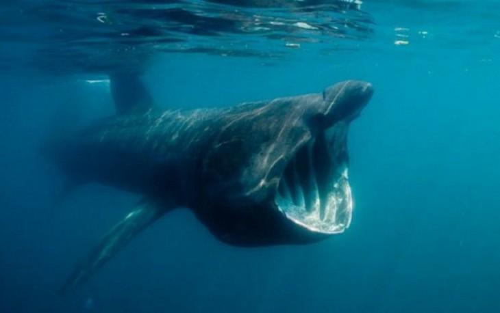 fotografía de una rara y enorme especie bajo el mar