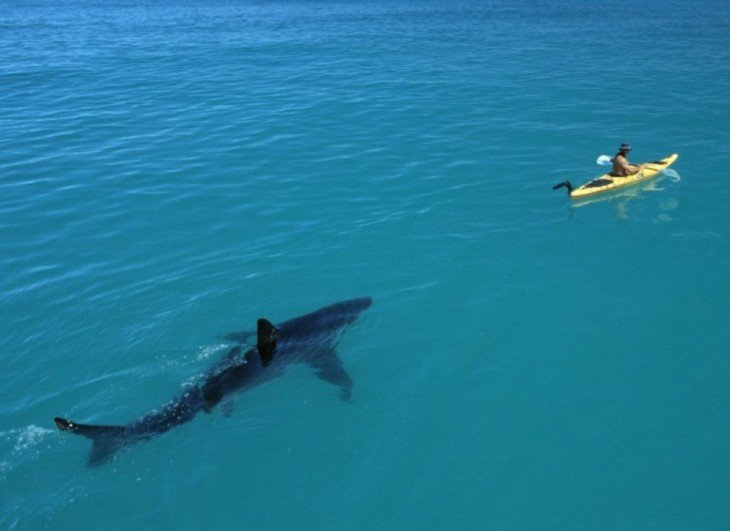 hombre en una lancha siendo perseguido por un tiburón