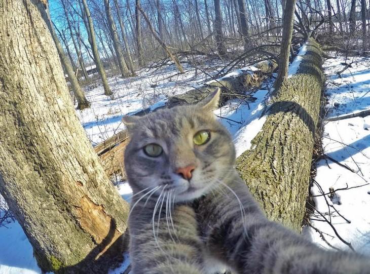 tomandose una selfie arriba de los troncos